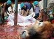menyembelih hewan kurban (ilustrasi)