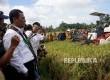 Menteri Pertanian Andi Amran Sulaiman saat menghadiri acara Panen Raya dan Serap Gabah Petani di Kabupaten Barru, Sulawesi Selatan, Senin (20/3).