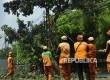 Pasukan oranye menarik pohon yang sudah dipangkas di kawasan Jalan Pejaten, Jakarta, Senin (31/7).