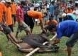Penyembelihan hewan kurban pada hari raya Idul Adha 1433 H (ilustrasi).