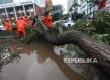 Petugas berusaha membersihkan pohon mahoni yang tumbang di Jalan Rasuna Said, Jakarta Selatan, Selasa (30/8). Pohon tumbang akibat hujan deran disertai angin kencang tersebut menyebabkan kemacetan kendaraan sepanjang tiga Kilometerdi dalah satu ruas Jalan