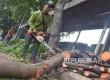Petugas dari Dinas Pertamanan dan Pemakaman Jakarta Selatan merapikan dahan pohon yang dipotong di kawasan Patal Senayan, Jakarta, Kamis (11/2). (Republika/Yasin Habibi)