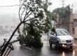 Sebuah kendaraan melewati pohon tumbang akibat Topan Bolaven di Yeosu, Korea Selatan, Selasa (28/8).   (Jang Duk-jong/AP)