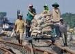 Sejumlah pekerja membawa karung berisi kricak (pecahan batu) dengan menggunakan lori pada proyek pembangunan rel ganda jalur Pekalongan-Semarang di Semarang, Jateng, Jumat (7/2).  (Antara/R. Rekotomo)