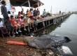 Warga mengamati bangkai hiu tutul (Rhincodon typus) yang terdampar, di Pelabuhan Rakyat Kroman, Gresik, Jawa Timur, Selasa (30/5).