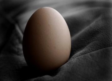 Manusia di Cangkang Telur