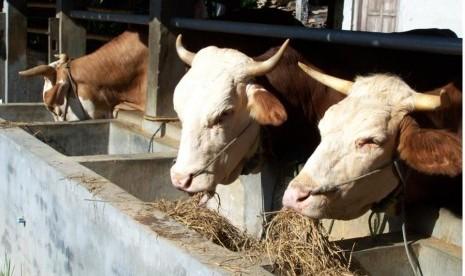 baznas tingkatkan pertanian / peternakan