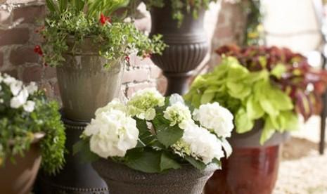 Berkebun dalam Pot (ilustrasi)