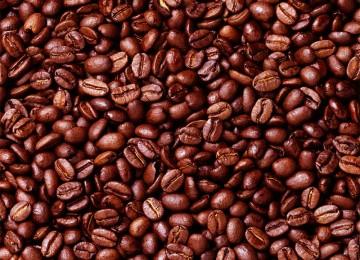 Biji kopi, ilustrasi