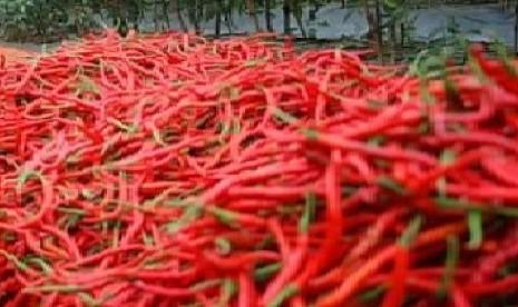 cabe merah