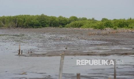 Hutan Mangrove di Jabar Banyak Disalahgunakan