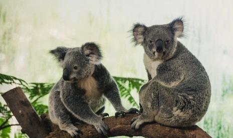 Binatang Pendongkrak Pariwisata Australia