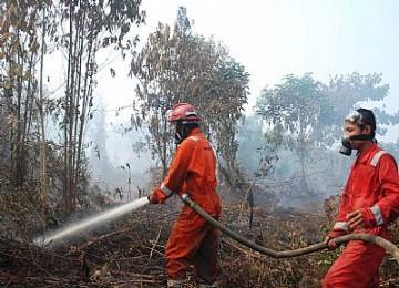 Hutan terbakar, ilustrasi