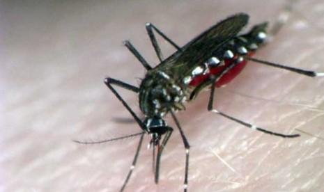 Dallas Terserang Virus Nyamuk Mematikan