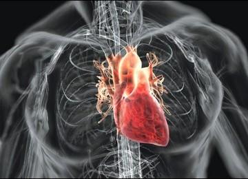 Jantung manusia