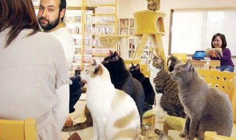 Kafe kucing pertama di Eropa telah dibuka di kota Wina,