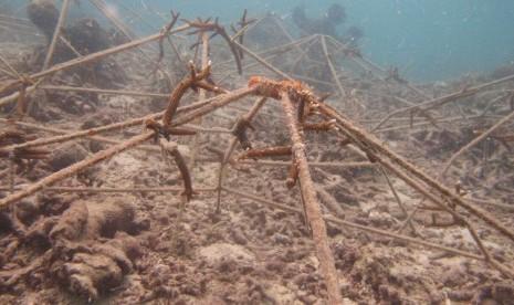 Beginilah Cara PT TAM Merawat Ekosistem Laut