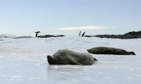 Penipisan Lapisan Es Kutub Utara Picu Perkembangan Ganggang