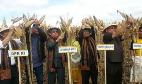Mentan Suswono, Gubernur Aceh Zaini Abdullah, Bupati Aceh Tenggara Hasanuddin, dan Anggota DPR Nasir Djamil melakukan panen jagung hibrida.