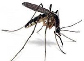 Jangan Menggaruk Bekas Gigitan Nyamuk