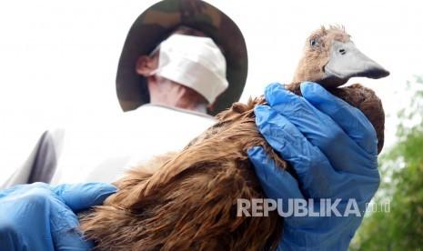 Cuaca tak Menentu, Peternak Diminta Waspada Flu Burung