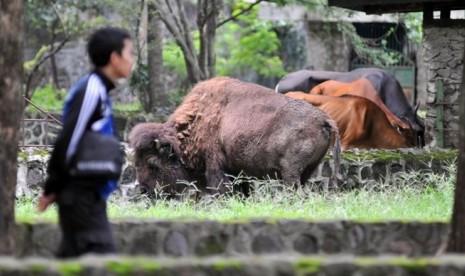 Pengunjung Kebun Binatang/ilustrasi