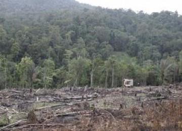 Penyusutan luas hutan akibat penggundulan dan konversi. (ilustrasi)