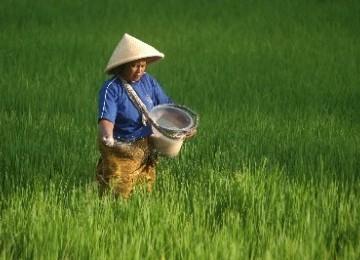 Petani sedang bekerja di sawahnya