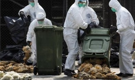 Hong Kong Health workers pack dead chickens, Thursday (28/01/2014) and then destroyed in a move to overcome the spread of the deadly avian influenza virus H7N9.