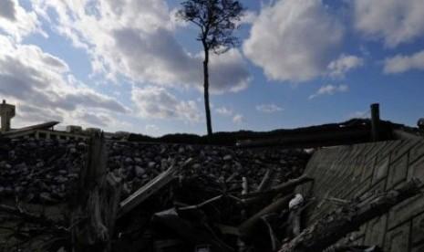 Pohon cemara ini dulunya bagian dari sebuah hutan yang lebat