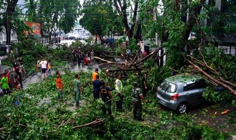 Ratusan Pohon Bogor Rawan Tumbang