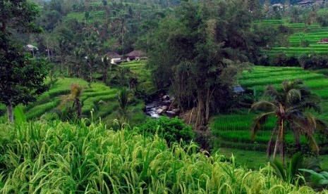Rice field in Tabanan, Bali, offers its natural beauty to tourists. The region of Tabanan will host Miss World 2013. (illustration)