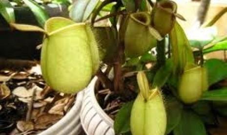 salah satu tanaman asli indonesia yang terancam punah a+ reset a