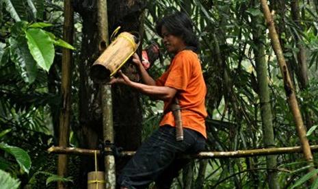 Seorang warga memanjat pohon aren untuk menyadap pohon dan menung