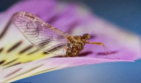 Serangga pun indah
