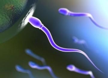Sperma (ilustrasi)