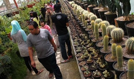 TAMAN KAKTUS CIBODAS. Pengunjung mengamati koleksi tanaman kaktus di taman kaktus Kebun Raya Cibodas, Jawa Barat, Sabtu, (3/9).