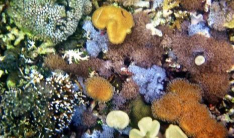 Taman soft coral di Desa Bangsring