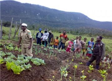 THL pertanian di Papua, ilustrasi