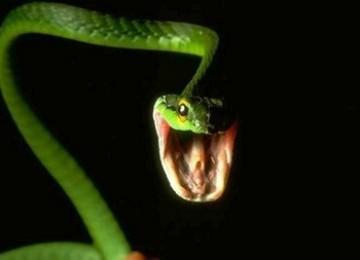 Ular Penis Ditemukan di Amazon