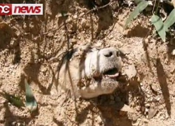 Subhanallah .. Still Alive Dog Shot by head 40 times, tied and buried alive