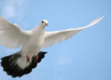 Seekor Burung Mati di Singapura...Warga Sibuk Pasang Sayembara untuk Tangkap Pelakunya