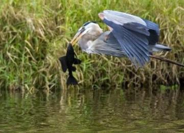 Mukjizat Alquran: Rezeki Burung-Burung