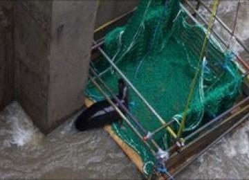 Lima Hari Terjebak di Kolam Pembangkit Listrik, Celia Berhasil Diselamatkan
