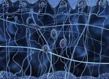 Alquran dan Sains: Perasaan