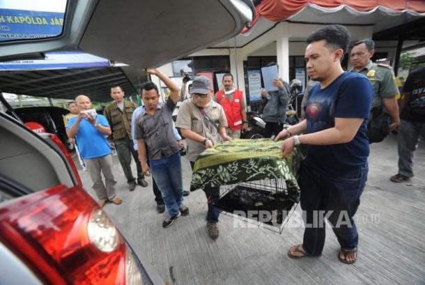 Petugas membawa Seekor Owa Jawa (Hylobates moloch) berusia 6 bulan  yang berhasil di selamatkan oleh BBKSDA Jawa Barat dari perdagangan satwa di lindungi, Sukabumi, Jawa Barat, Jumat  (20/10).