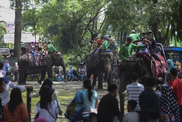 Pengunjung menikmati wahana tunggang gajah di Kebun Binatang Surabaya, Surabaya, Jawa Timur (ilustrasi)