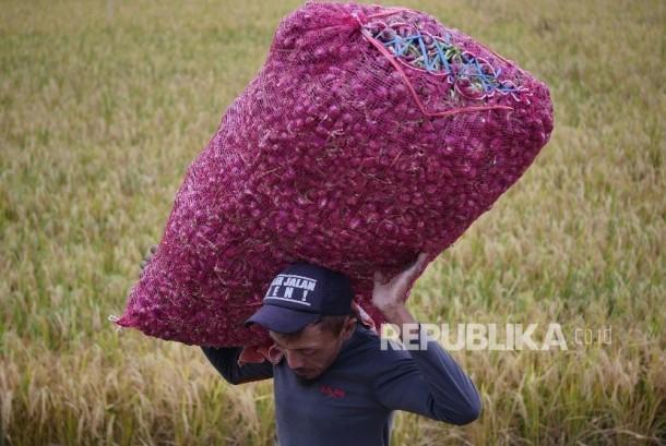 Ilustrasi hasil panen bawang merah di Pejagan, Brebes, Jawa Tengah.