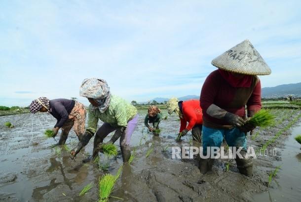 Buruh petani  (ilustrasi)