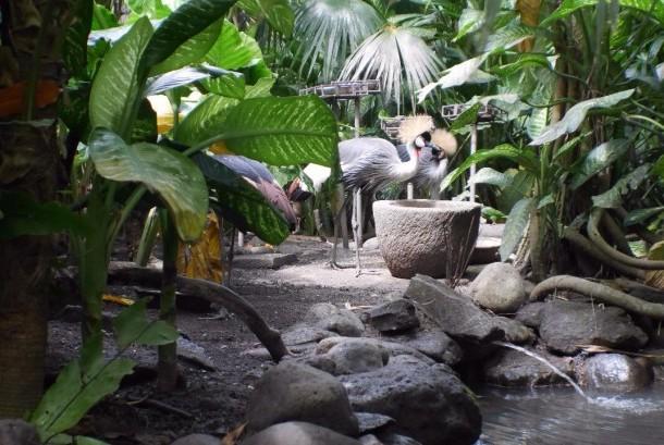 Burung-burung di Bali Bird Park.